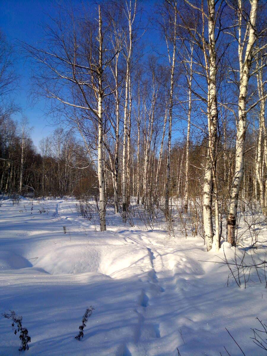 лес зима Природа