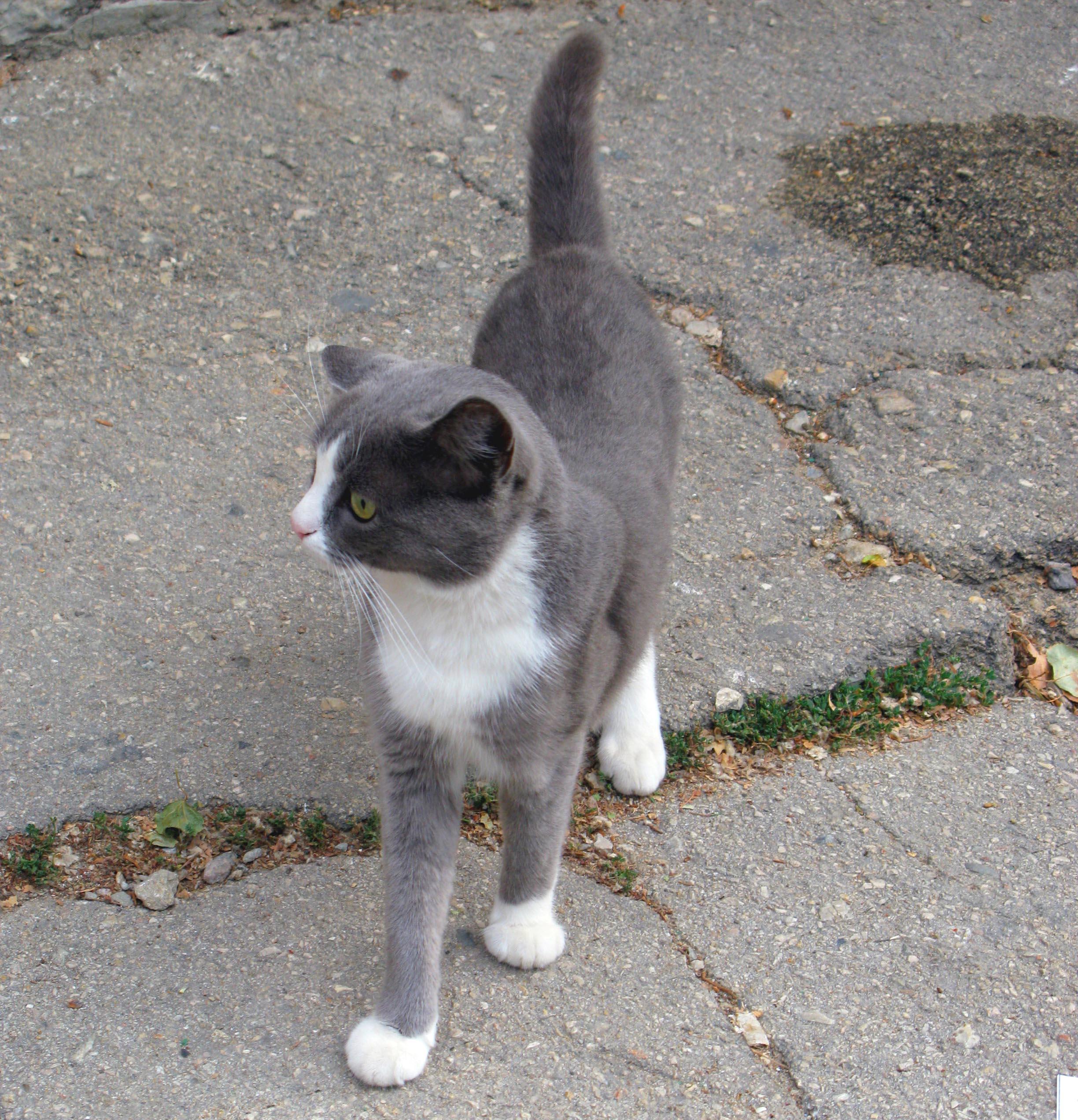 кошка  Зверюшки