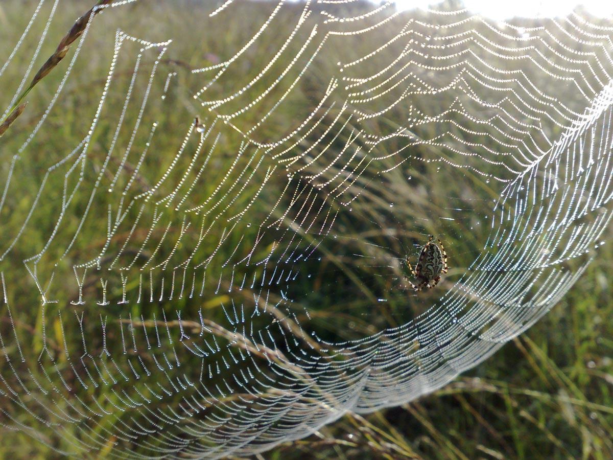 паук в паутине  Зверюшки