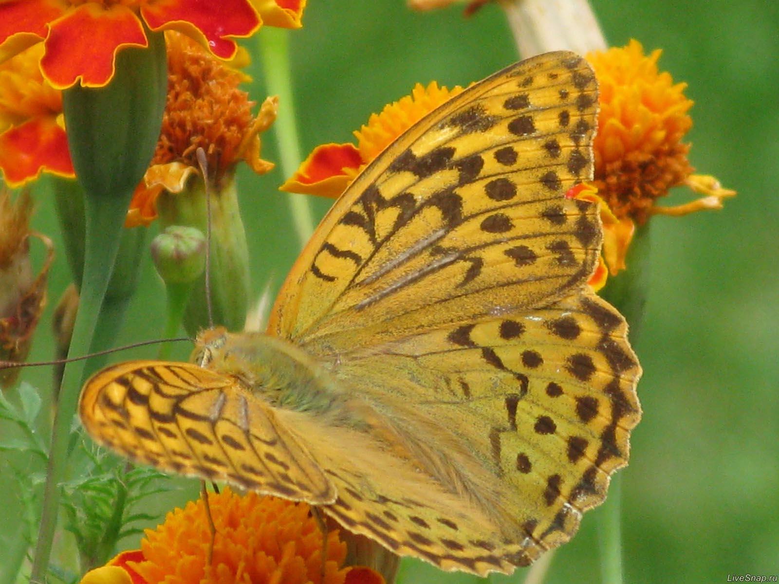 бабочка макро  Зверюшки