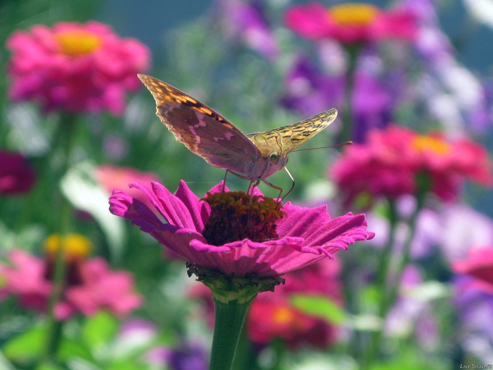 бабочка на цветке  Зверюшки