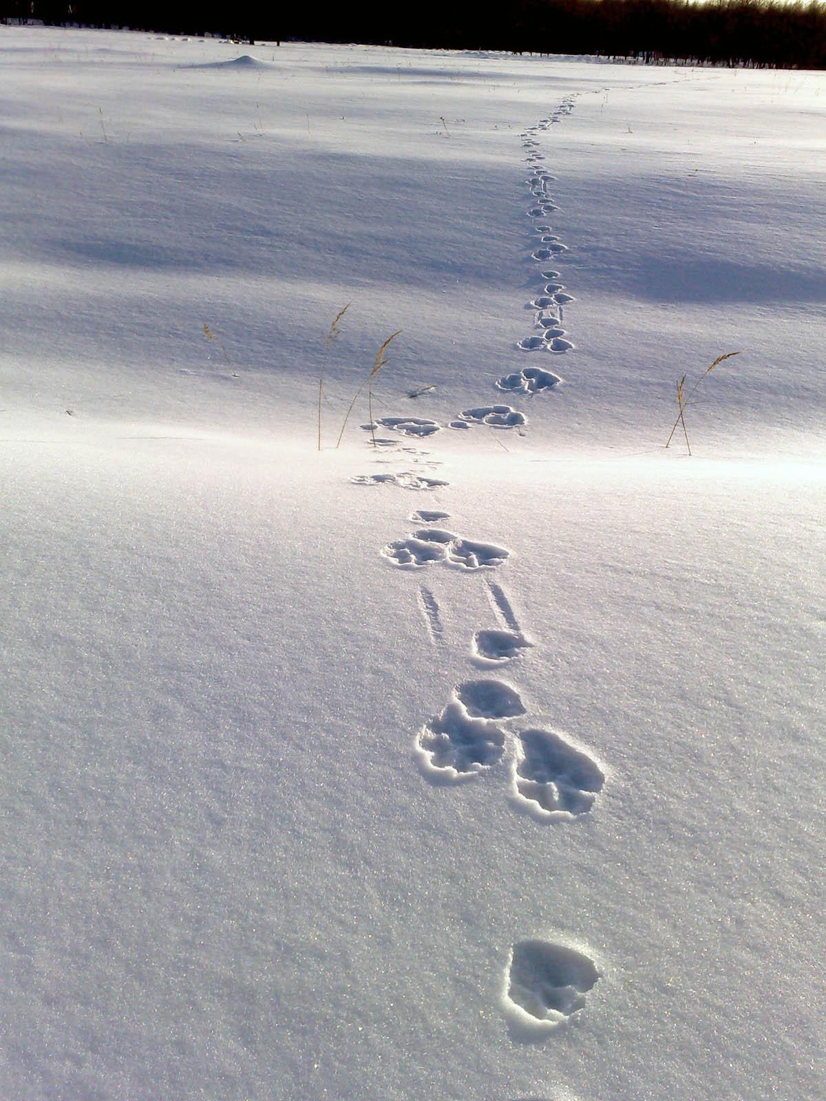следы на снегу  Деревня