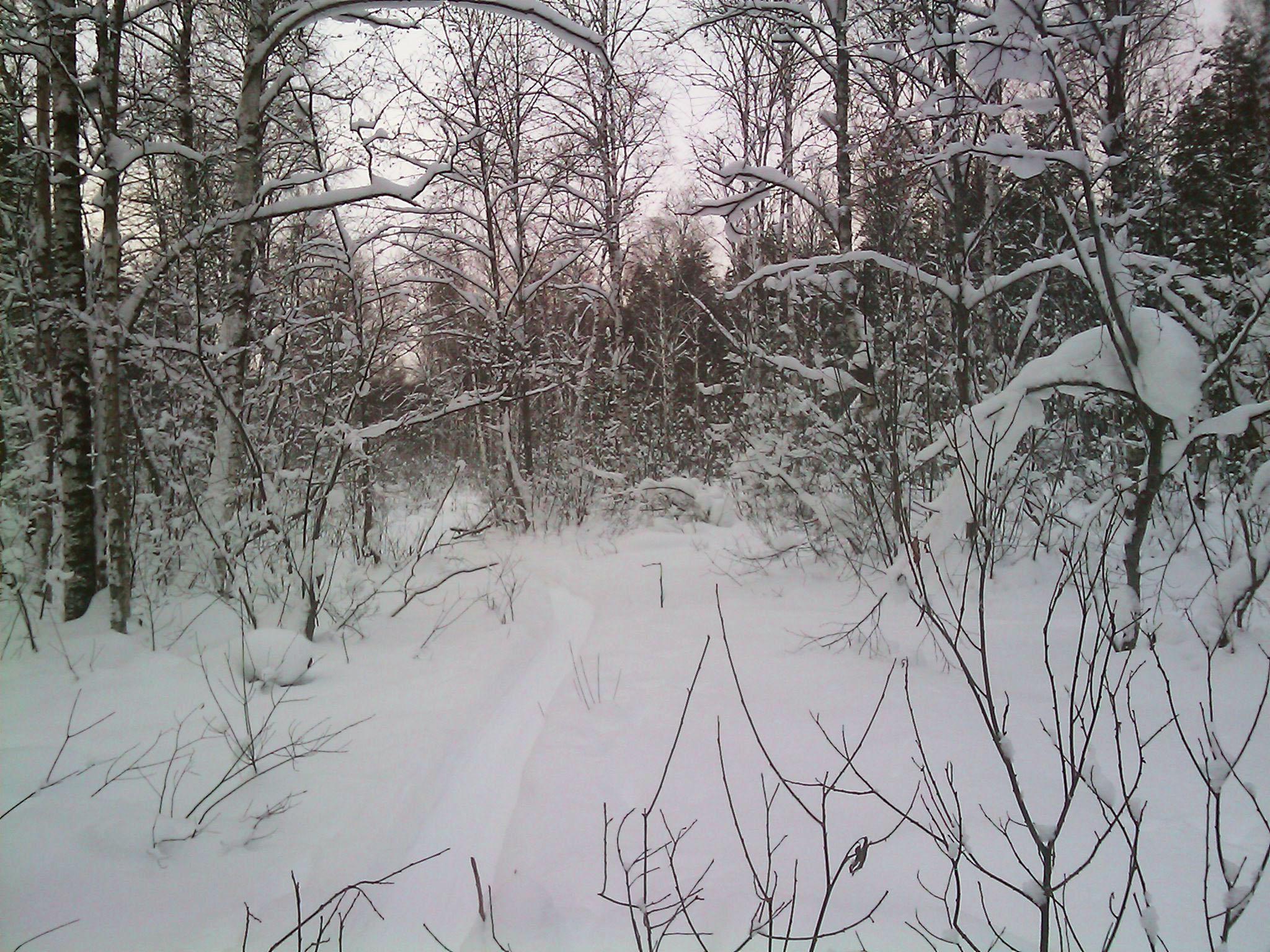 все в снегу Природа