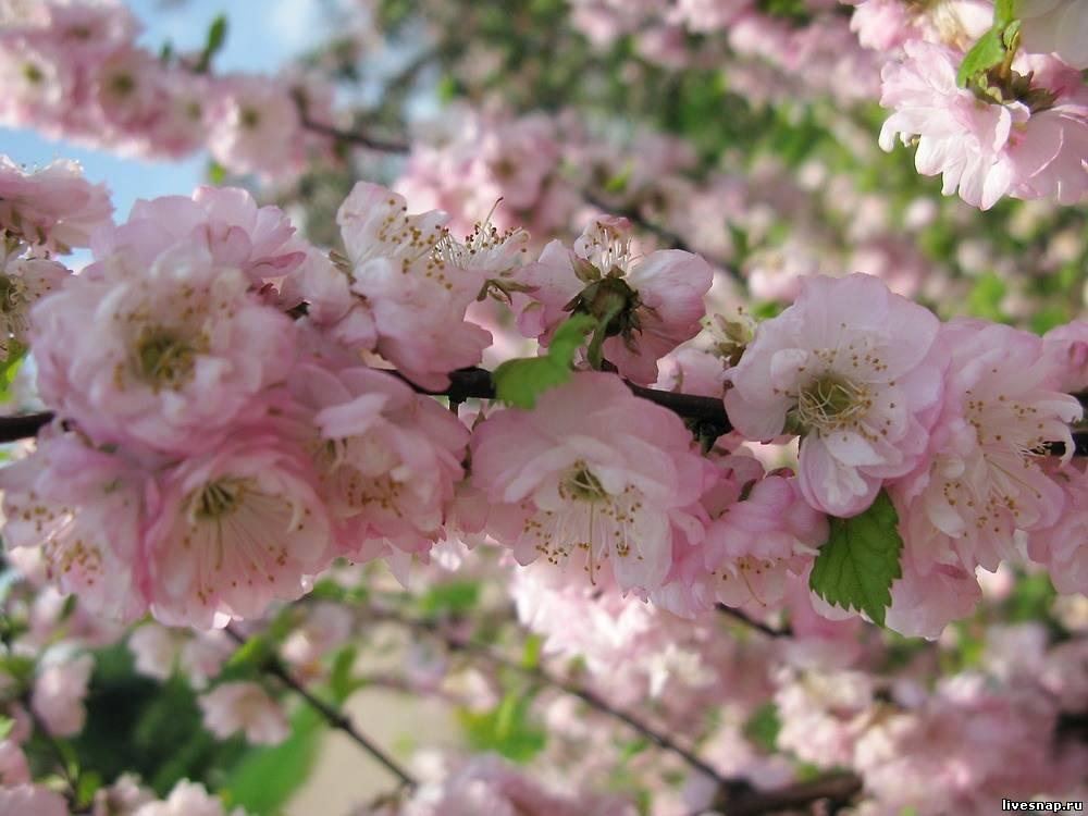 Нежность весны  Природа