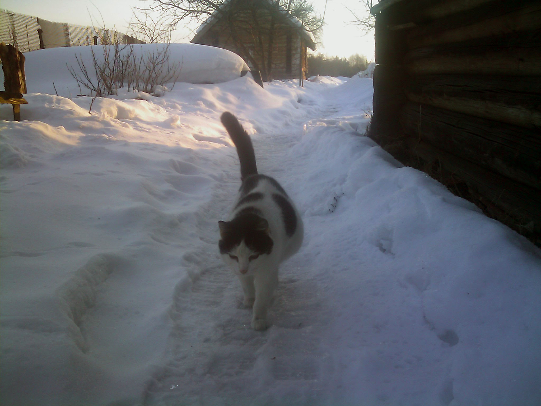 беременная кошка  Зверюшки