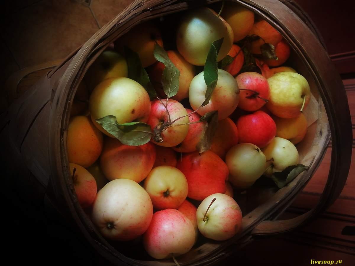 яблочки в корзине