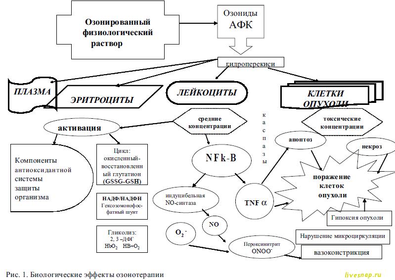 Биологические эффекты озонотерапии