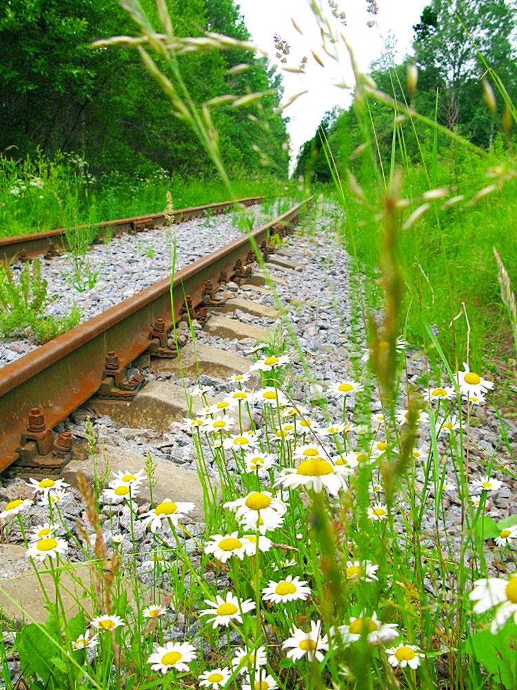 железная дорога  Деревня