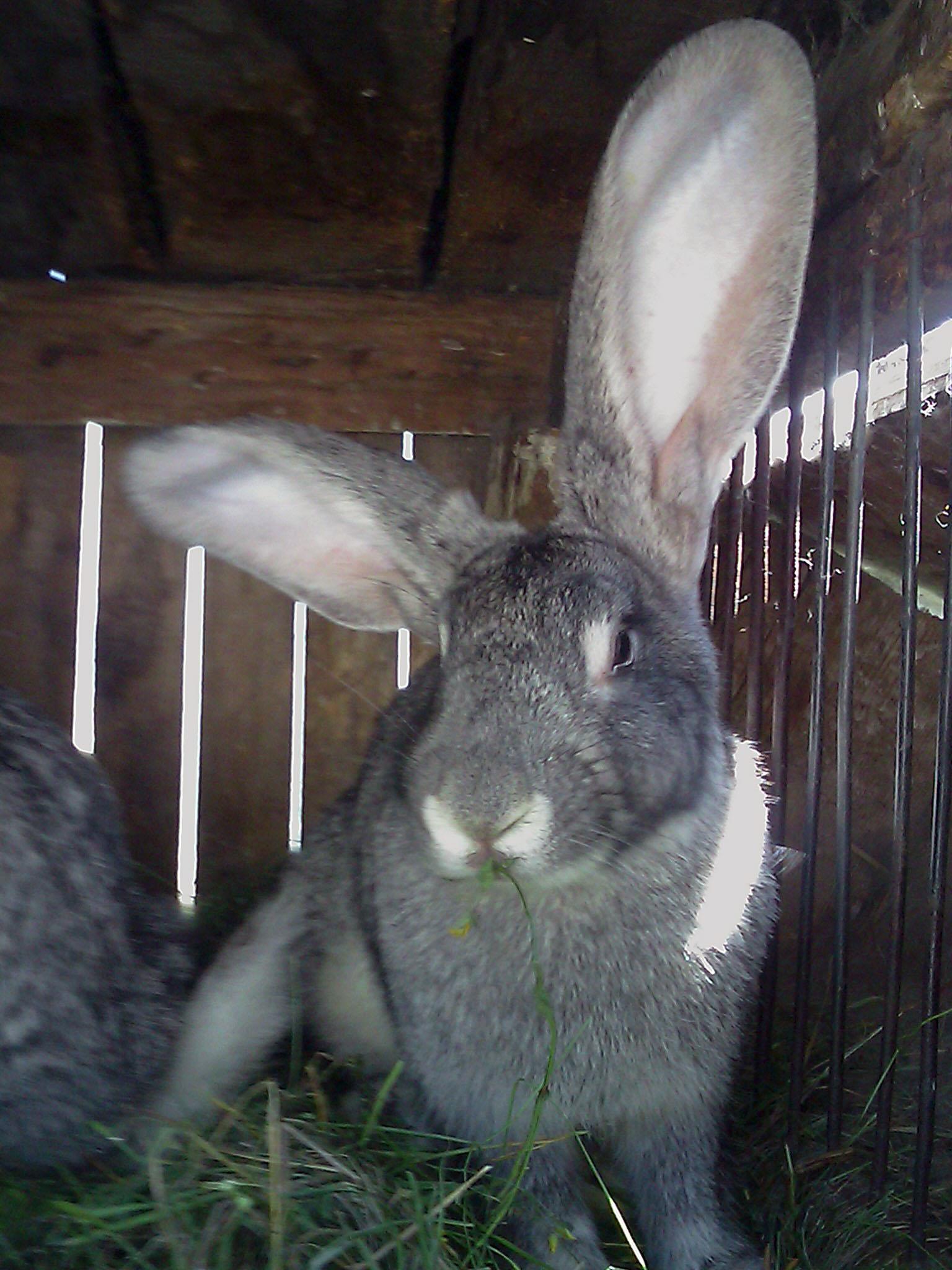 кролик  Зверюшки