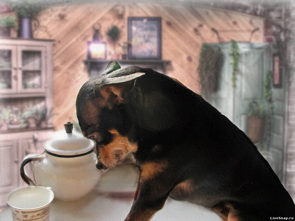 где мой кофе Зверюшки
