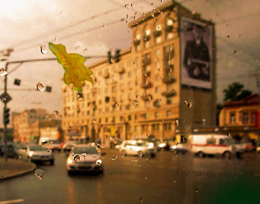 дождь и листик