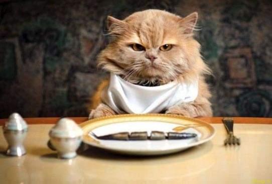 кот-кушает