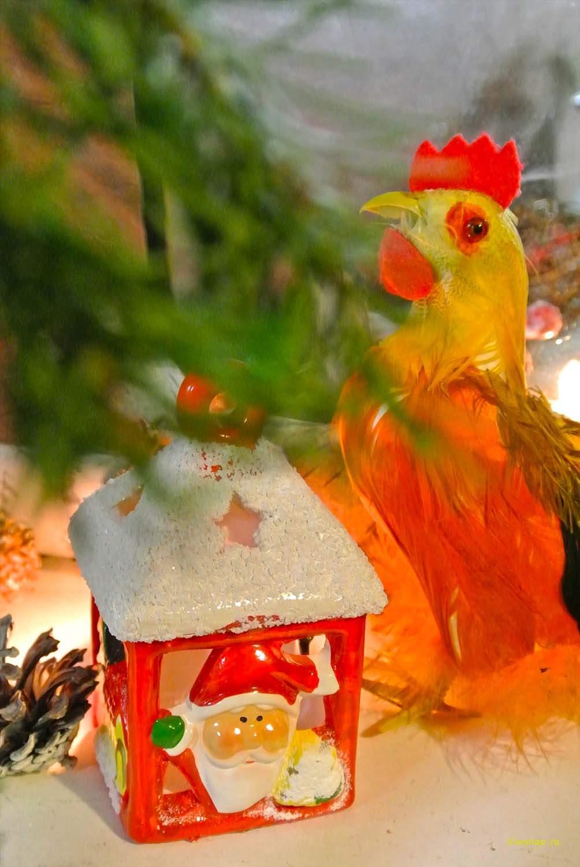 петуш готовится к празднику